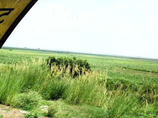 Fields in Uttar Pradesh