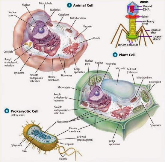 Perbedaan Sel Hewan, Tumbuhan dan Bakteri