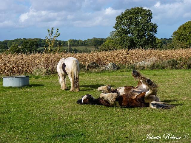 Randonnée à cheval en Normandie