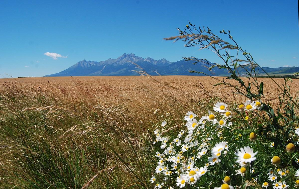 vue d'ensemble du massif des Tatras photographié depuis les plaines slovaques