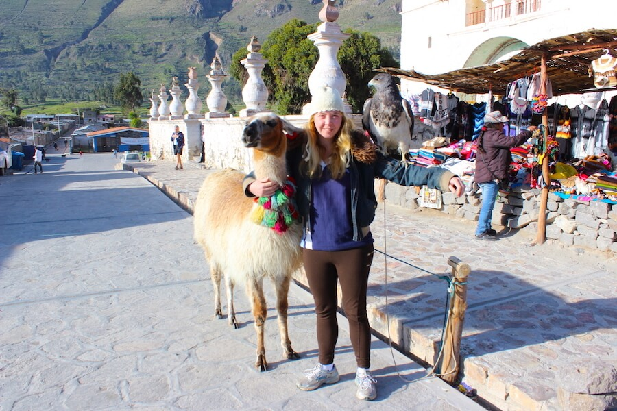 maca church me with alpaca and hawk