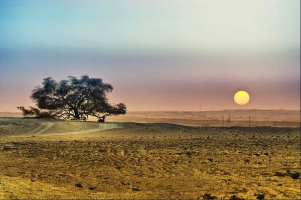 تعرفوا على شجرة الحياة فى البحرين LYCPn1-600x398.jpg