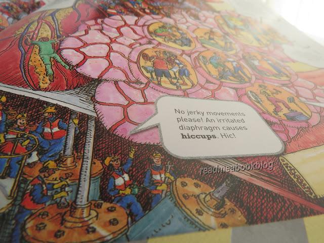 Il corpo umano spiegato ai bambini in inglese read me a book