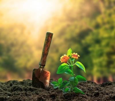 Composition Writing: Tree Plantation
