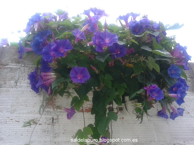 flores-agosto-asturias