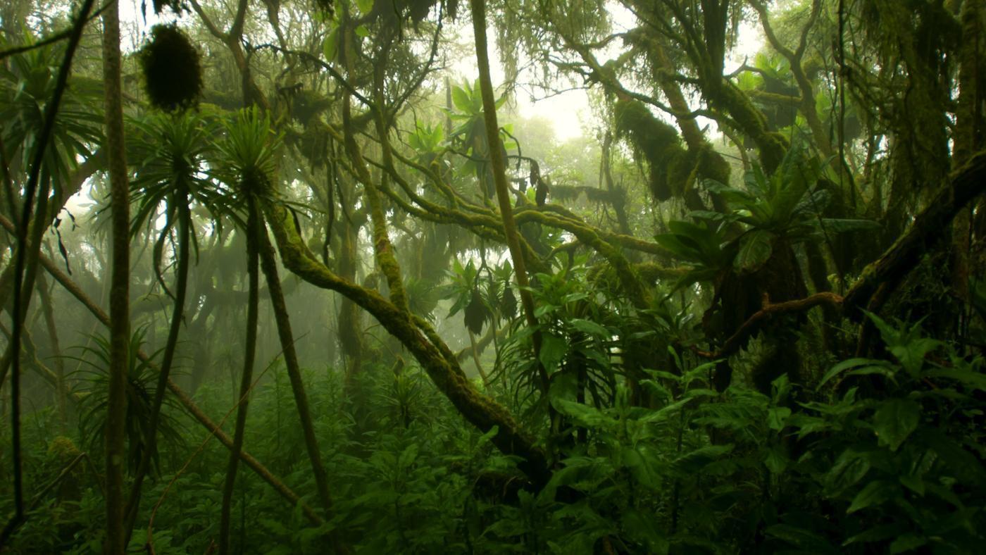 Jungla densa del Congo.