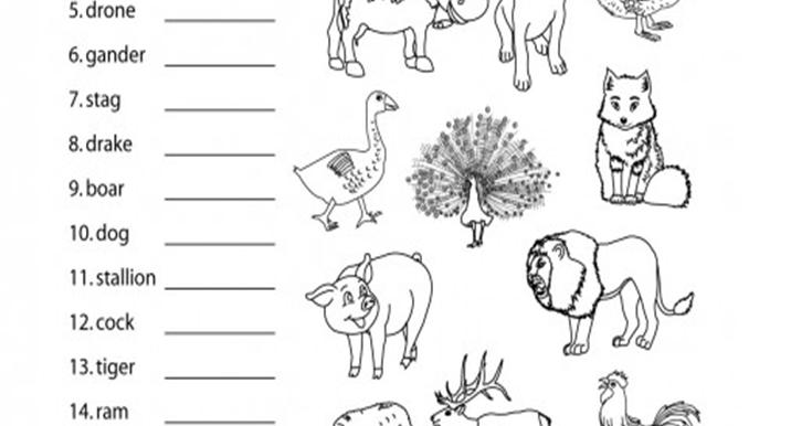 animal worksheet: NEW 481 ANIMAL EGGS WORKSHEET