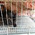 Pertama Kali Bawa Kucing Ke Klinik Veterinar Kerajaan