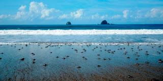 http://www.bromomalang.com/2015/09/pesona-rumah-penyu-di-pantai-sukamade.html