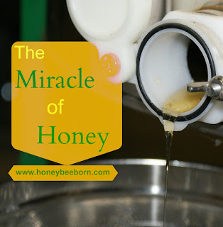 Honey begins to flow from the extractor