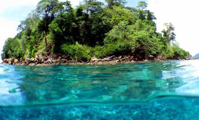 Contoh Rantai Makanan di Laut dan Gangguan yang Terjadi