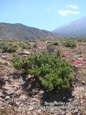 flora del monte guancar