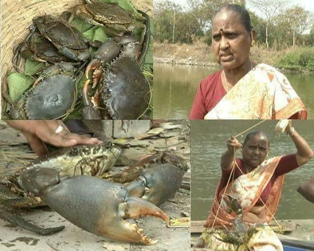 Gunabai Sutar Crab Export