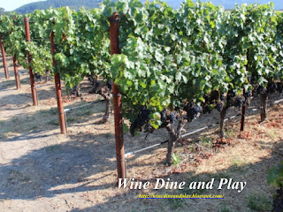 The Vineyards of silver Oak where they grow the cabernet grape