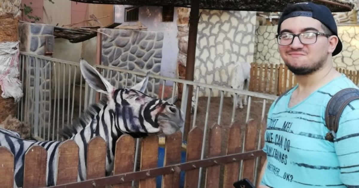 Egyptian Zoo Painted A Donkey Black And White To Pass It Off As A Zebra