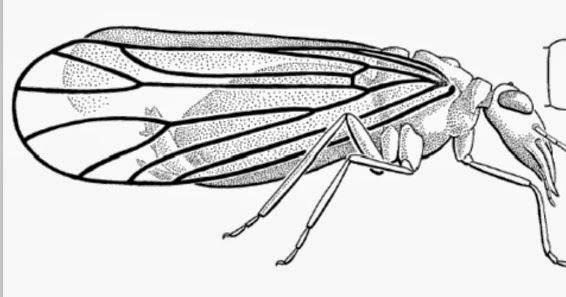 Variety of Life: Paraneoptera