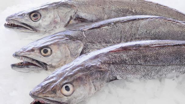 tipos de pescado para adelgazar