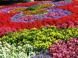 Tiga Manfaat Berkebun yang  Belum Kita Ketahui