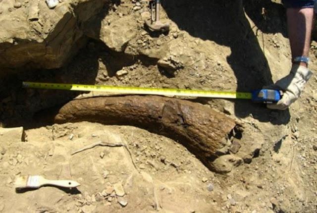 Fosil en Dawson, Montana