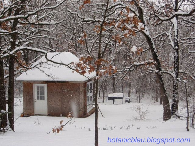 Botanic Bleu garden shed in a snowy woods shows how it looked in the beginning
