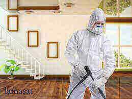 شركة تنظيف حشرات بجدة , تنظيف الحشرات فى مكة