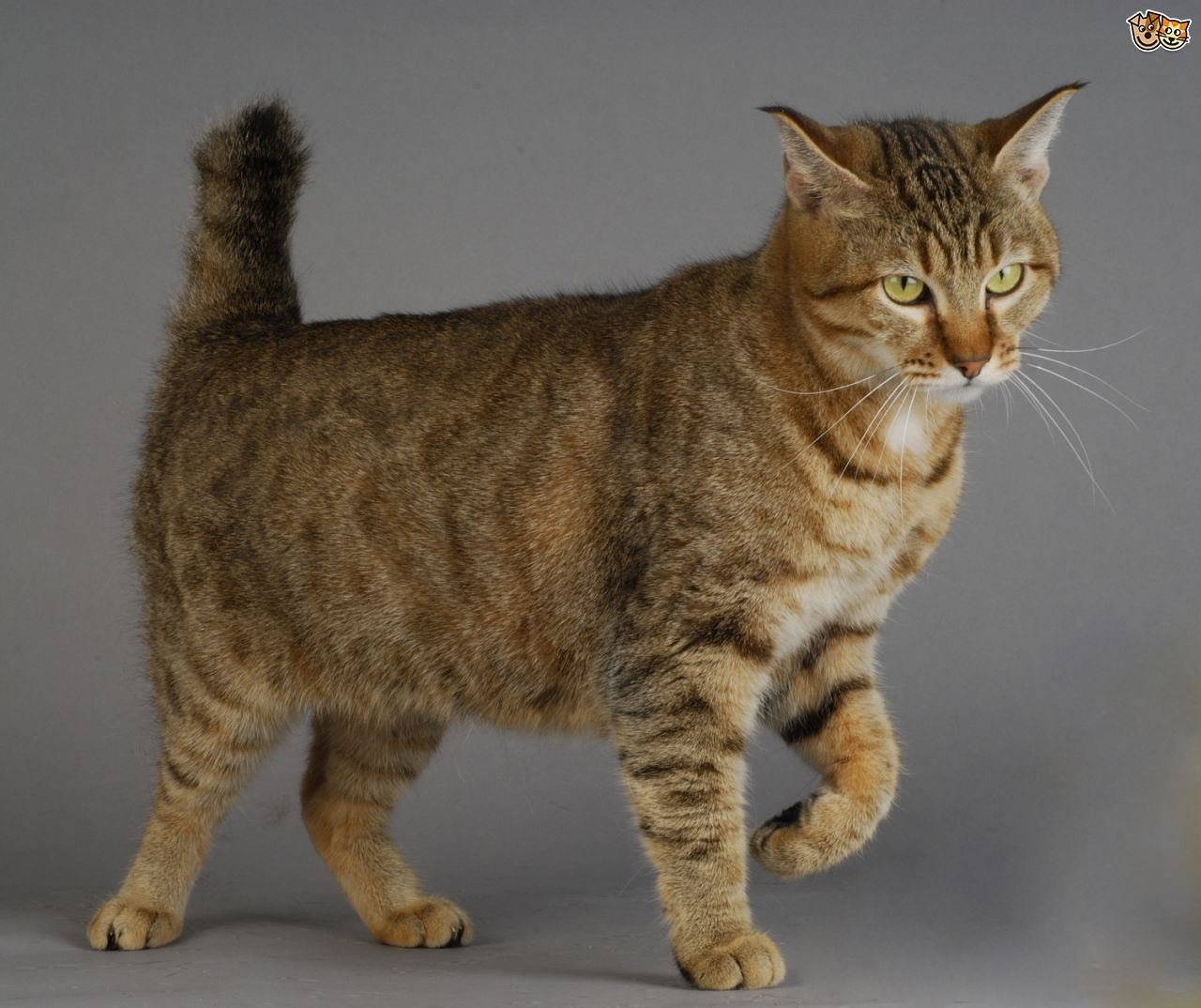 Cat Lover Blog Cat Breeds