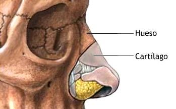 Imagen de una nariz señalando su hueso y cartílago