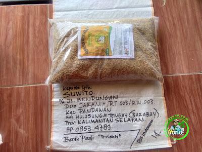 Benih pesana SUWITO Hulu Sungai Tengah, Kalsel  (Sebelum Packing)