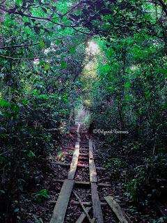 Jalan Sore di Hutan