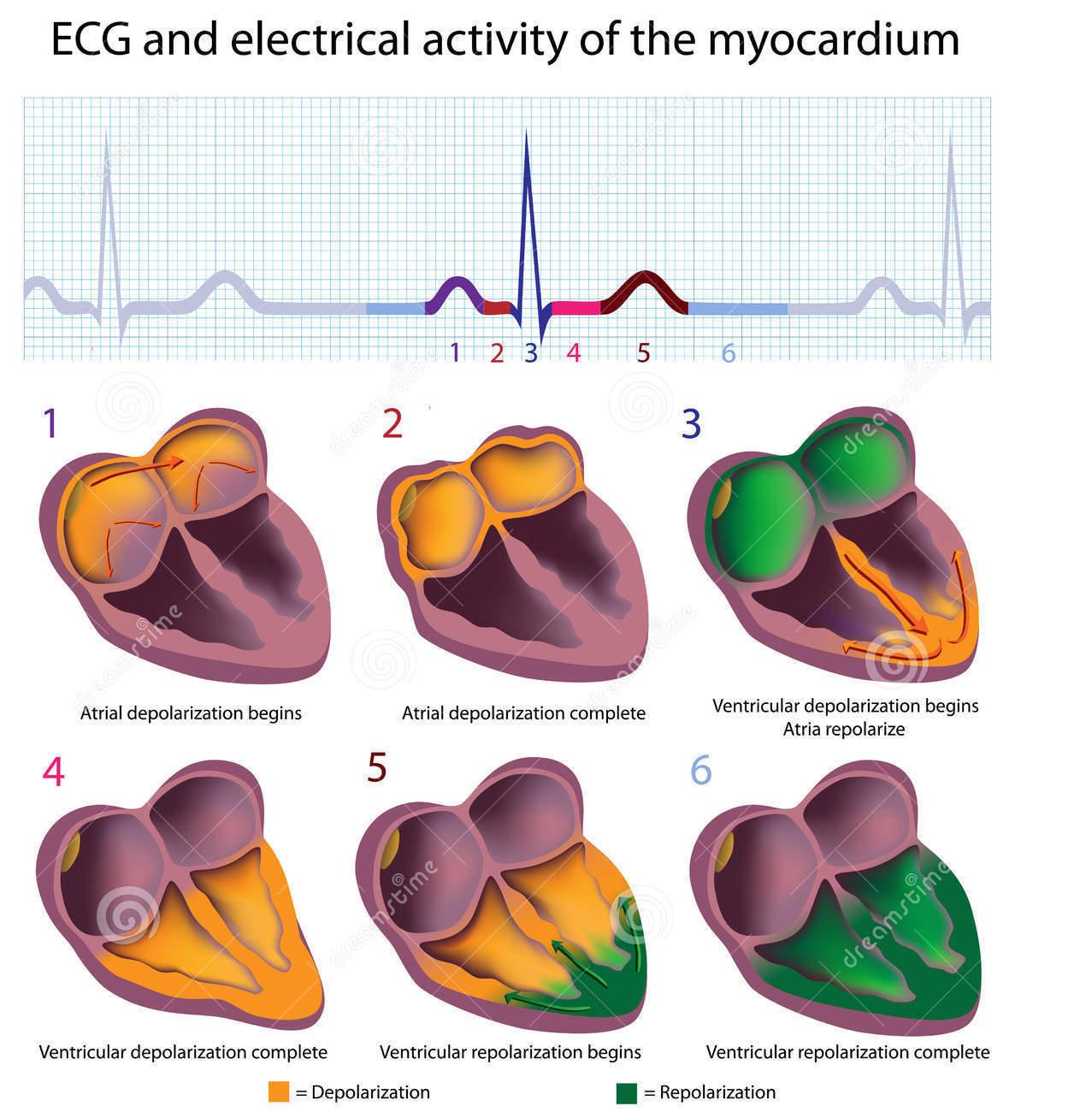 Manuali Di Medicina Principi Di Elettrofisiologia