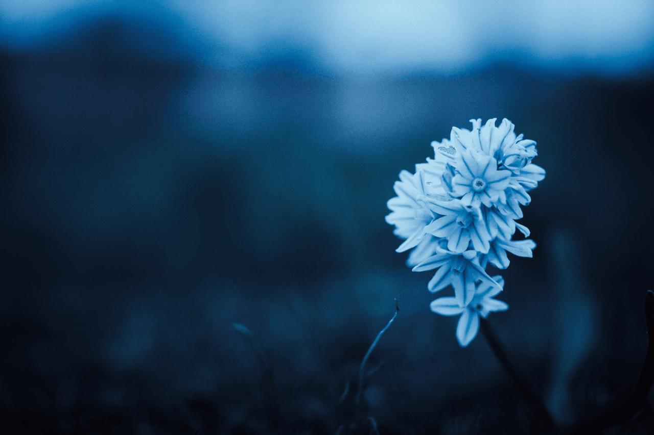 Blue, flower