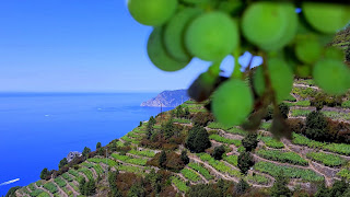 Vineyards at Cinque Terre