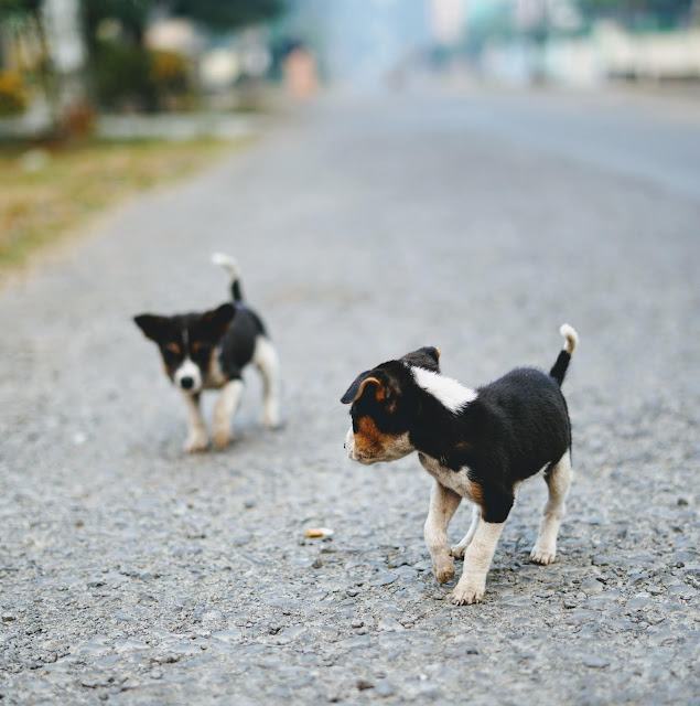Puppies Clicked By Sourajit Saha 6