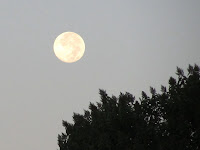 Full moon setting