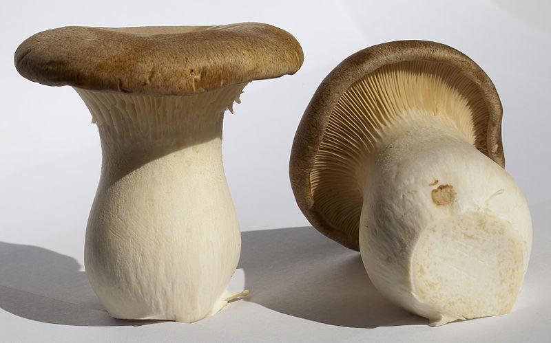 Spécial champignons japonais!