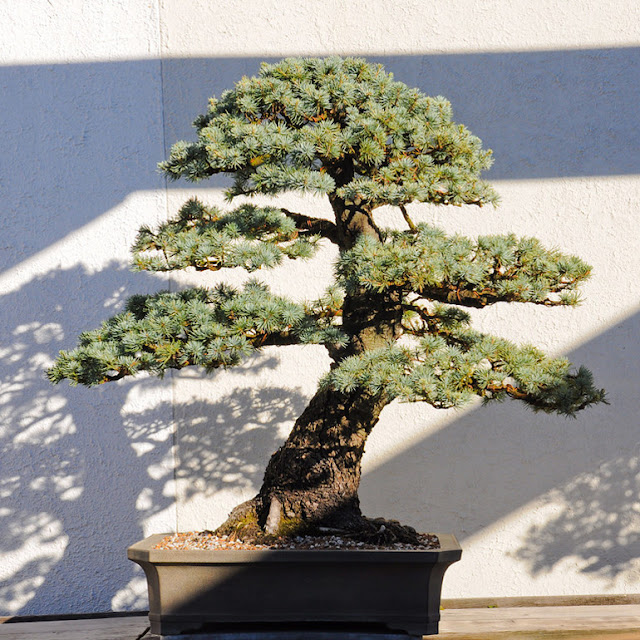 John Naka Bonsai