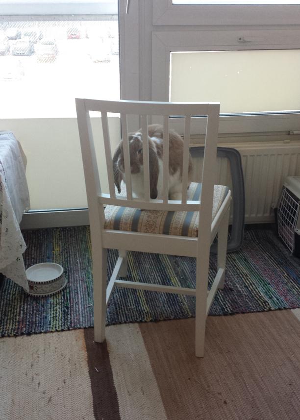 Ranskanluppa tuolin päällä