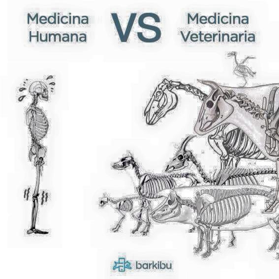 Student Room Veterinary Medicine
