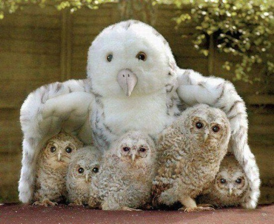 Funny And Cute Animals: The Owl   Very Cute and Lovely Bird Photographs