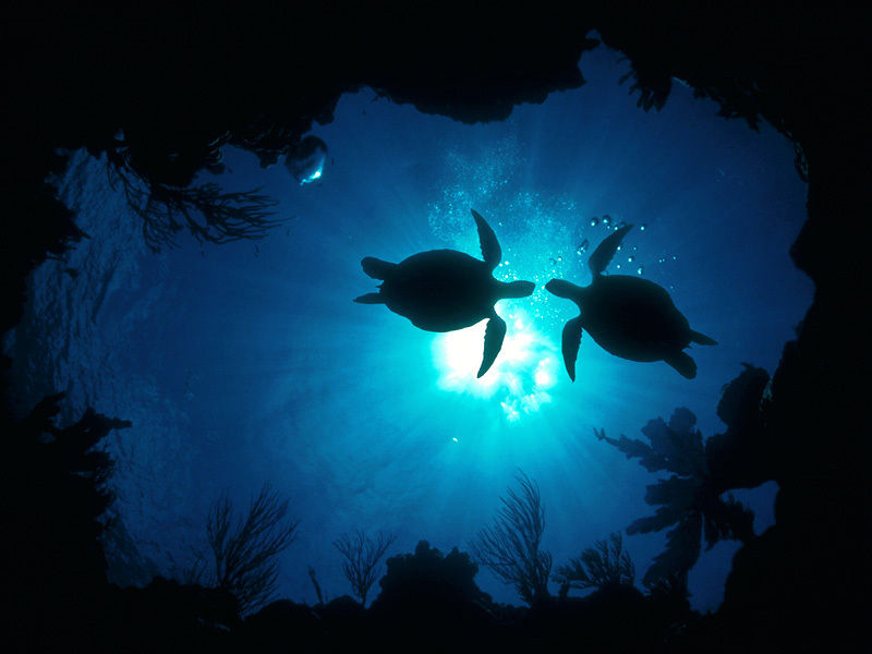 Turtle Wallpapers - Pets Cute and Docile