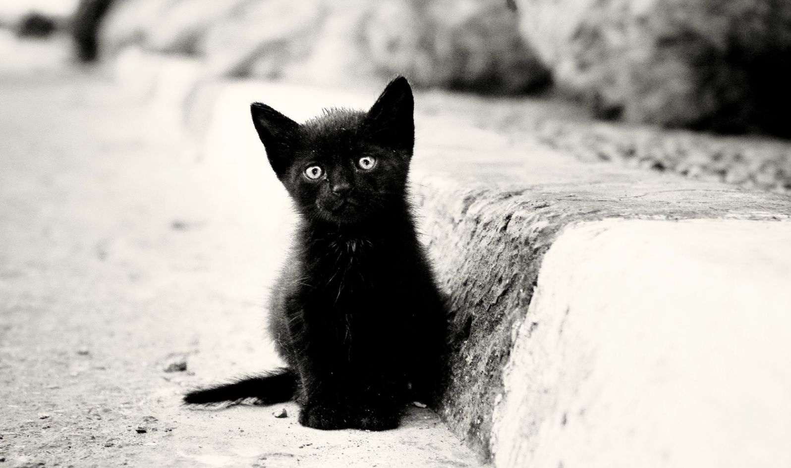 Cute Black And White Kitten Wallpaper All Hd Wallpapers Gallery