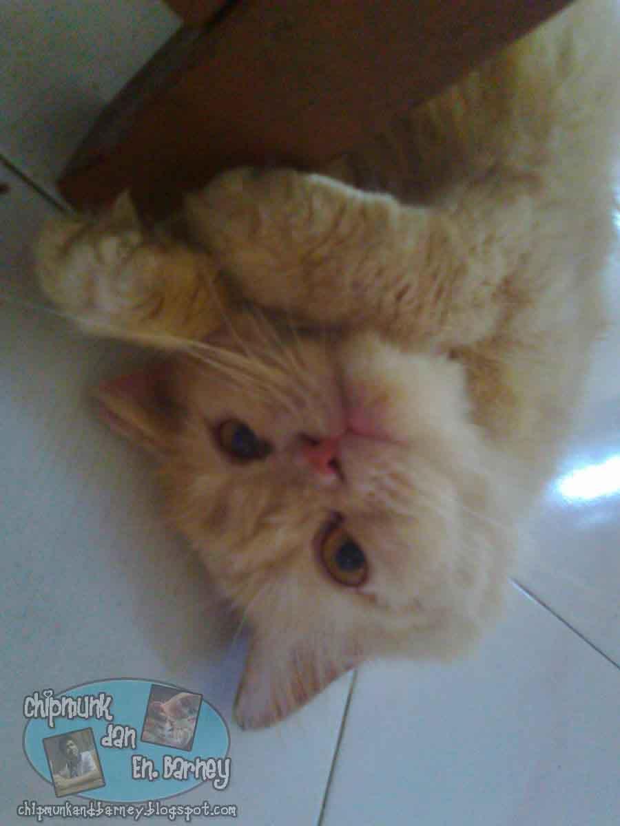 All About Life: Kucing Gatal yang suka mengintai!
