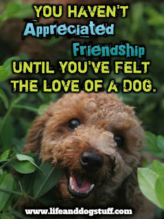 dog quotes love and loyalty | dog quotes friendship
