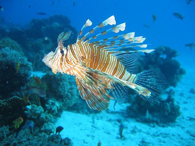 سمكة البحر
