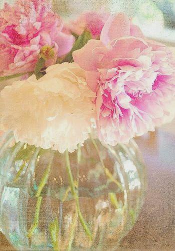 beautiful pink and light peonies