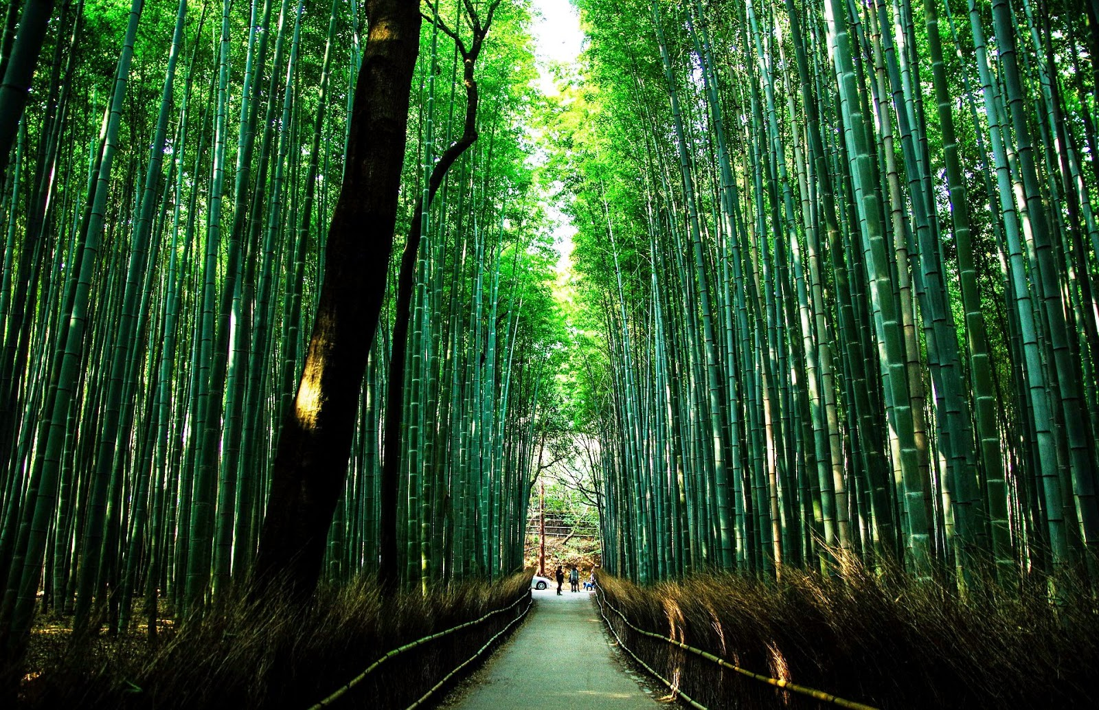 京都-京都景點-推薦-嵐山-Arashiyama-自由行-旅遊-市區-京都必去景點-京都好玩景點-行程-京都必遊景點-日本-Kyoto-Tourist-Attraction