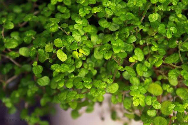 drobne listki kwiaty doniczkowe