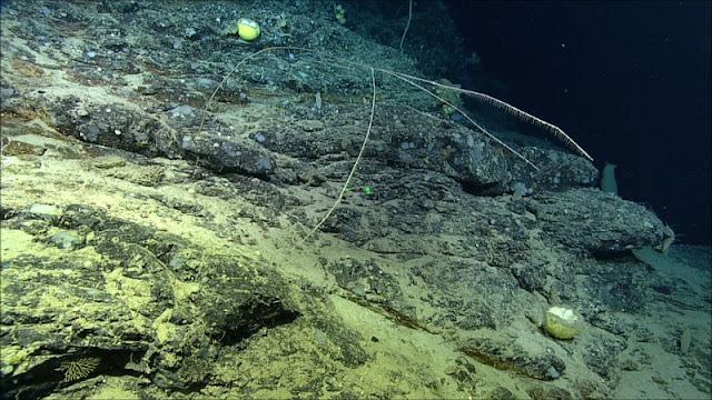 New species of meat-eating sponge found off the coast of Canada