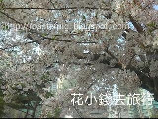 萇山站櫻花