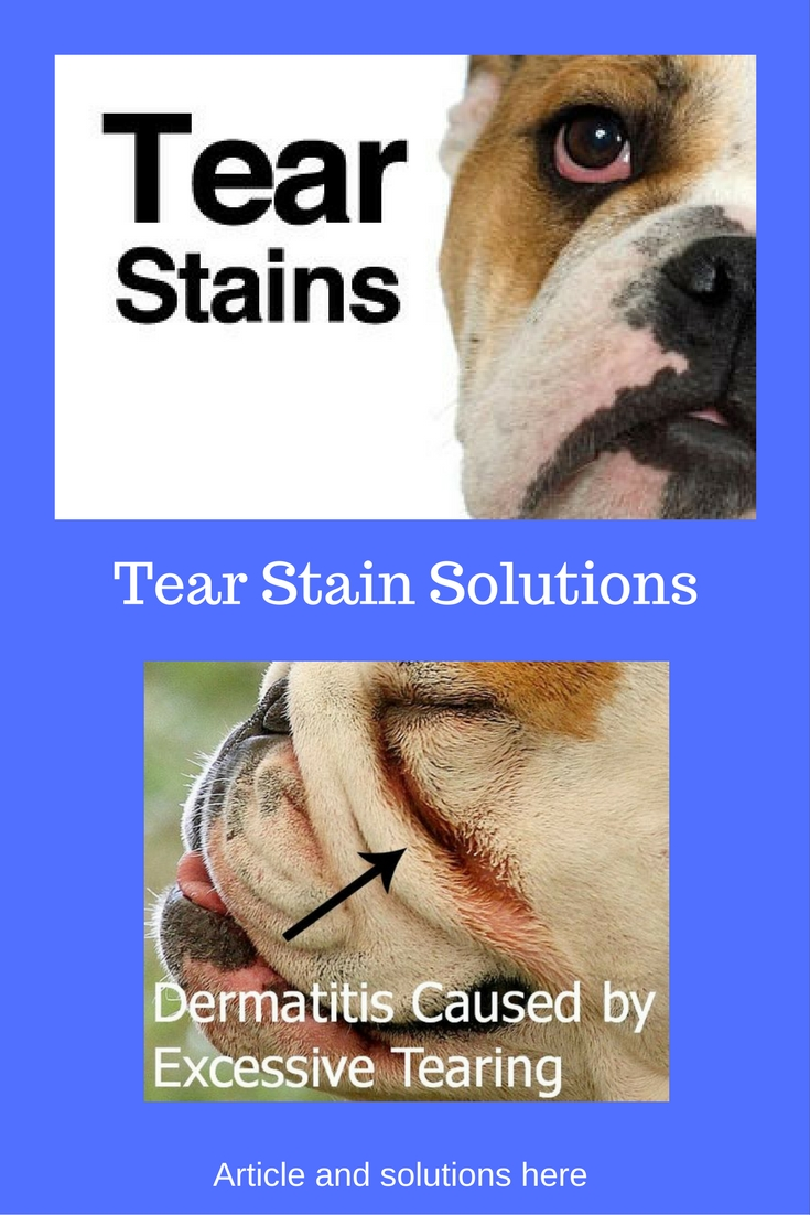 Natural Remedies For Tear Stains In Dogs